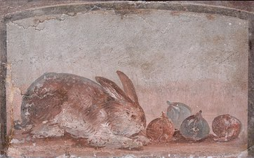 Fresco showing a rabbit nibbling at figs  AD 1–79  From Pompeii, (unknown House) c. Museo Archeologico Nazionale di Napoli