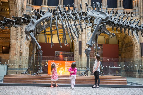 Dippy, courtesy of the Natural History Museum, London