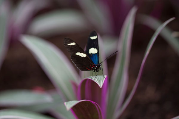Sensational Butterflies runs at the Natural History Museum until September. Photo courtesy of the Trustees of the Natural History Museum.