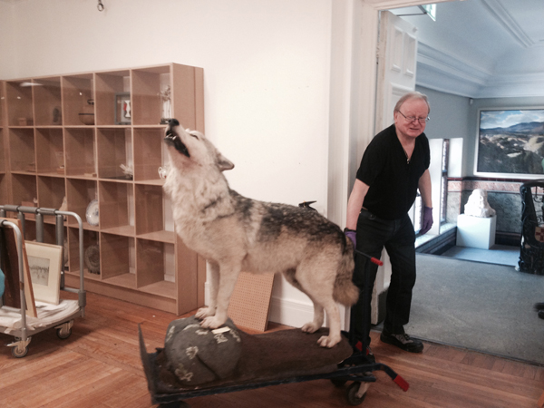 Tim Padley, Curator of Archaeology at Tullie House Museum and Art Gallery returns a wolf to the stores after it featured in the museum's summer exhibition.