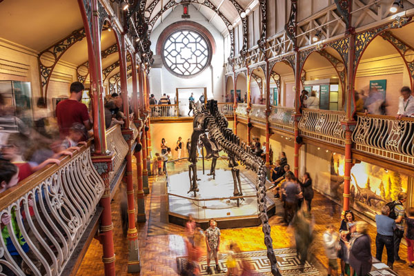 dippy the dinosaur on display at Dorset County Museum