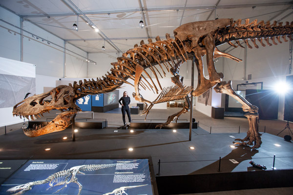 huge dinosaur skeleton on show in glasgow